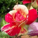 Purificare l'aria casalinga con una delicatezza floreale!