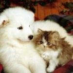 Come addestrarsi da se, un cane o gatto per tenerlo in casa