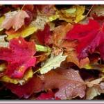 Avete mai pensato di creare un quadro con delle foglie?