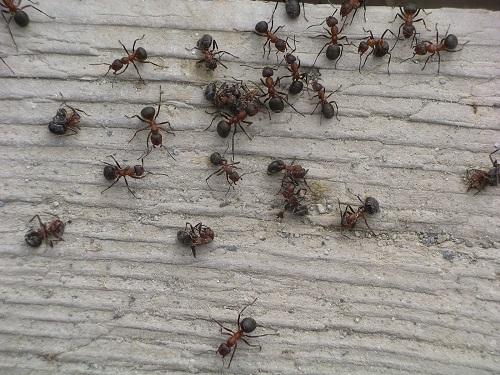 Prevenire e combattere l 39 invasione di formiche in casa - Invasione di formiche in cucina ...