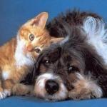 Come rimuovere i peli di cani e gatti e tenere la casa pulita