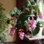 Guida: come curare le piante dopo l'estate