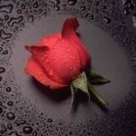 San Valentino: quaglie alle rose con miele e castagne