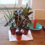 Come prendersi cura delle piante prima di partire per le vacanze