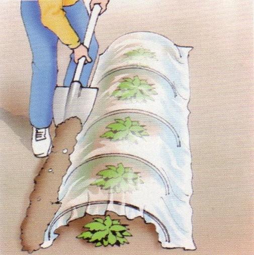 Come costruire una serra ad arco per le piante - Costruire una serra in casa ...