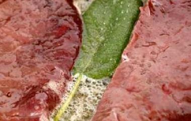 Scaloppe di fegato con kiwi e pompelmi rosa