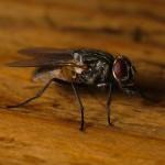 Trappola per mosche fai da te