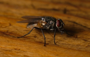 Trappola per le mosche