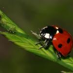Rimedi naturali contro i pidocchi delle piante
